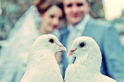 петропавловск камчатский продажа цыплят
