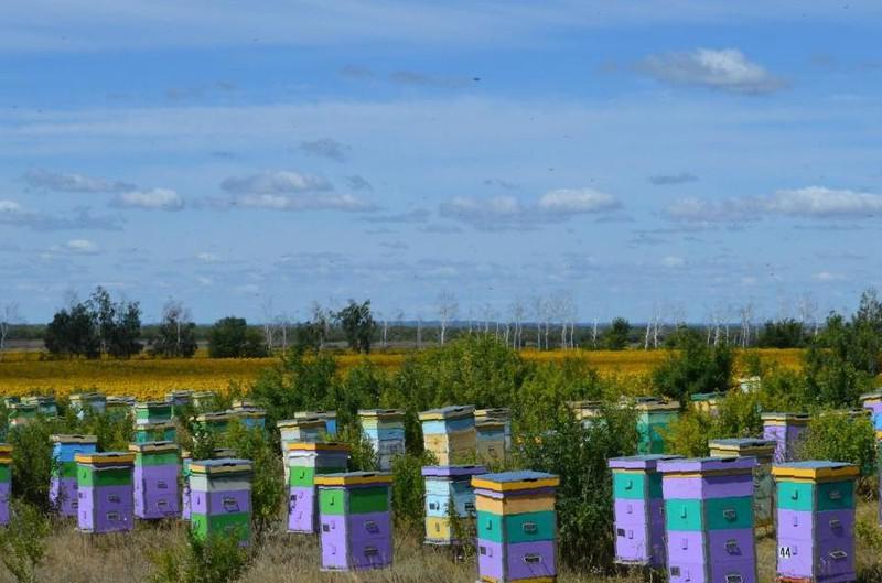 Полярный мед со вкусом северных трав побывал на международной выставке продовольствия в берлине