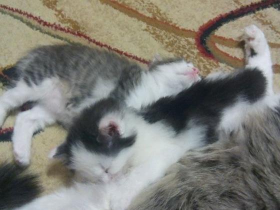 Доска объявлений бокситогорск котята дать объявление о покупке без регистр