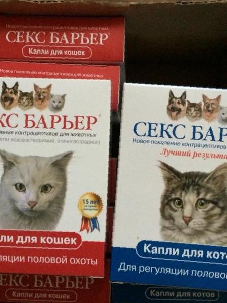 порядок приема секс барьера для кошки